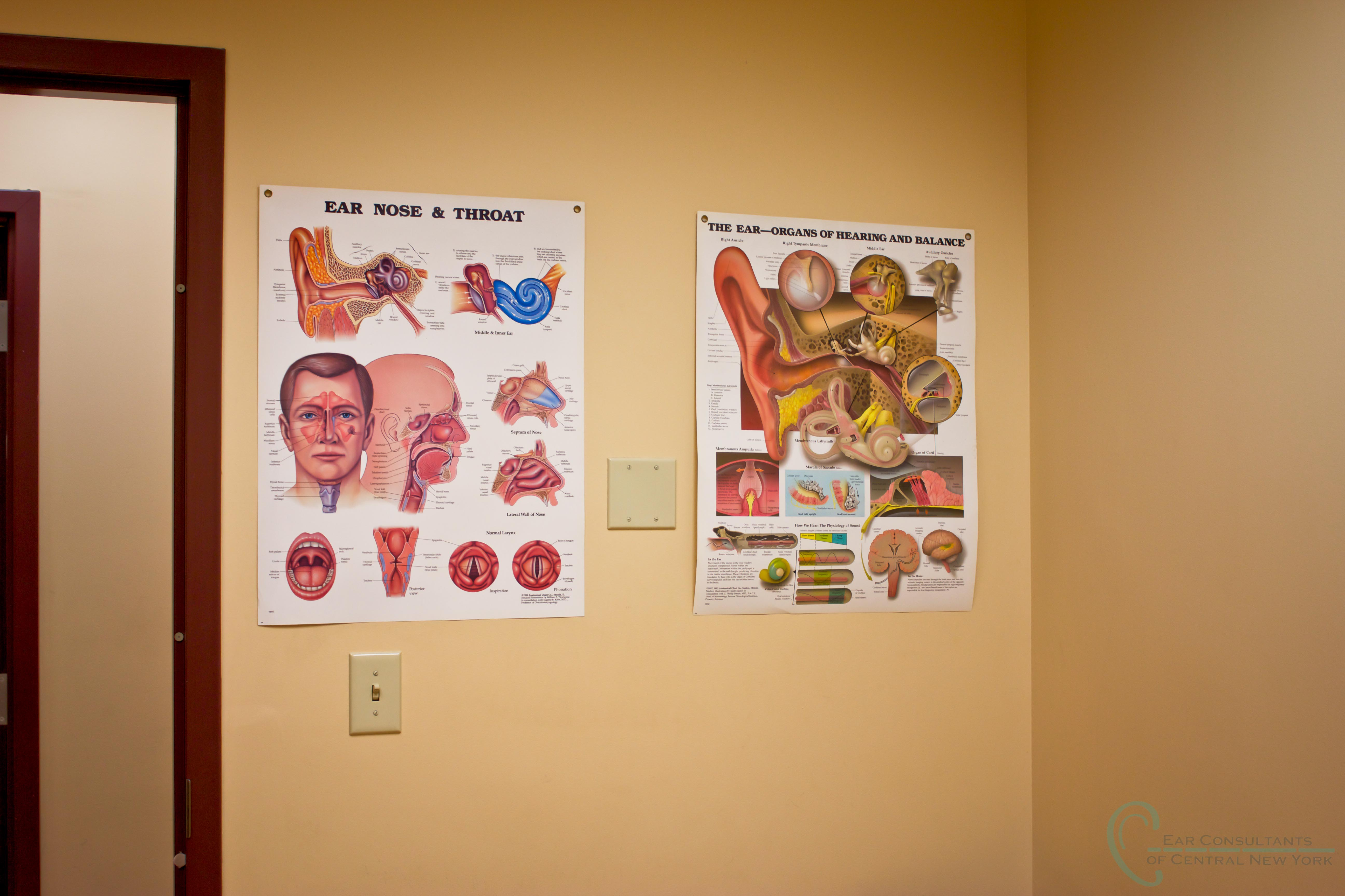Ear Consultants of CNY Posters